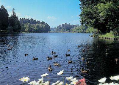 Waldsee © Kultur und Tourismusamt Lindenberg