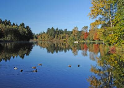 Waldsee-(2) © Kultur und Tourismusamt Lindenberg